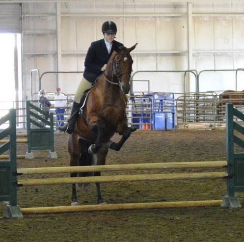 Horse Judging Information Animal Science