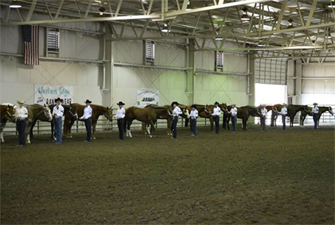 Showmanship Competitors