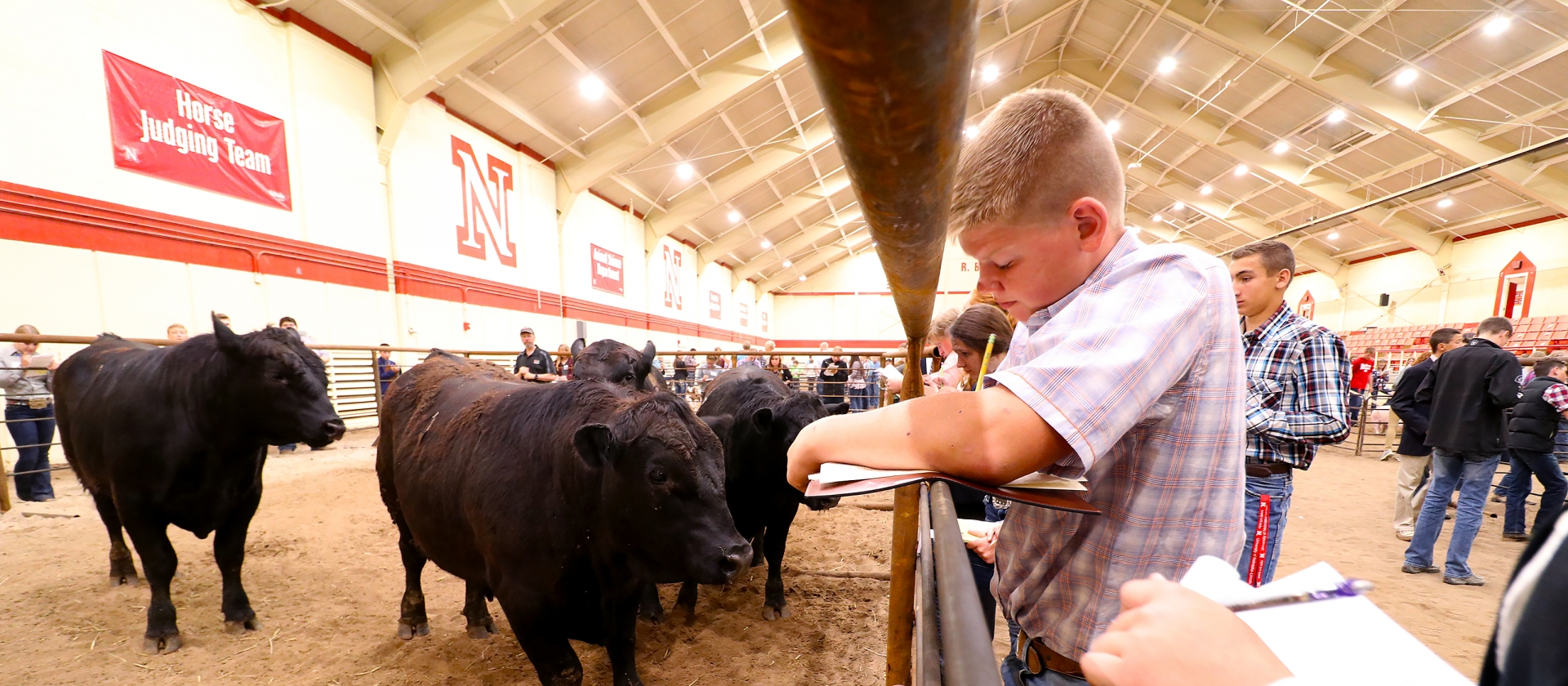 group of youth gather in the R.B. Warren arena and participate in livestock judging.