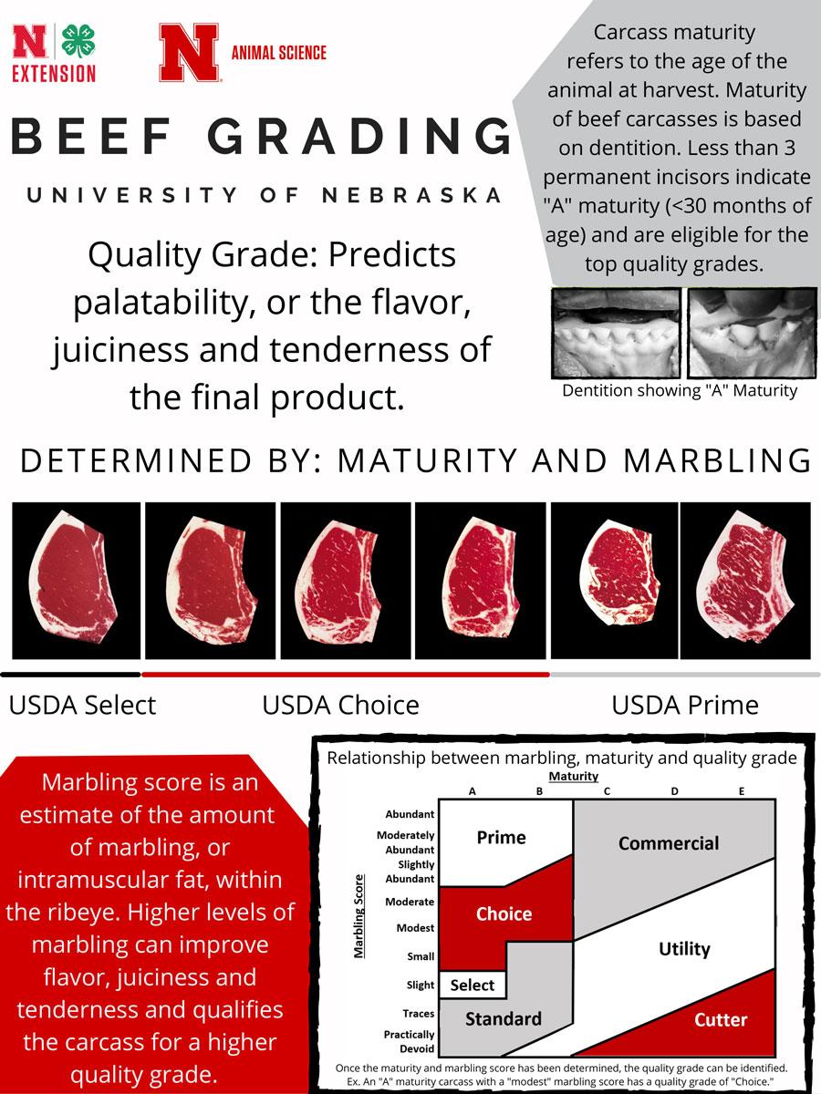 Beef Carcass information