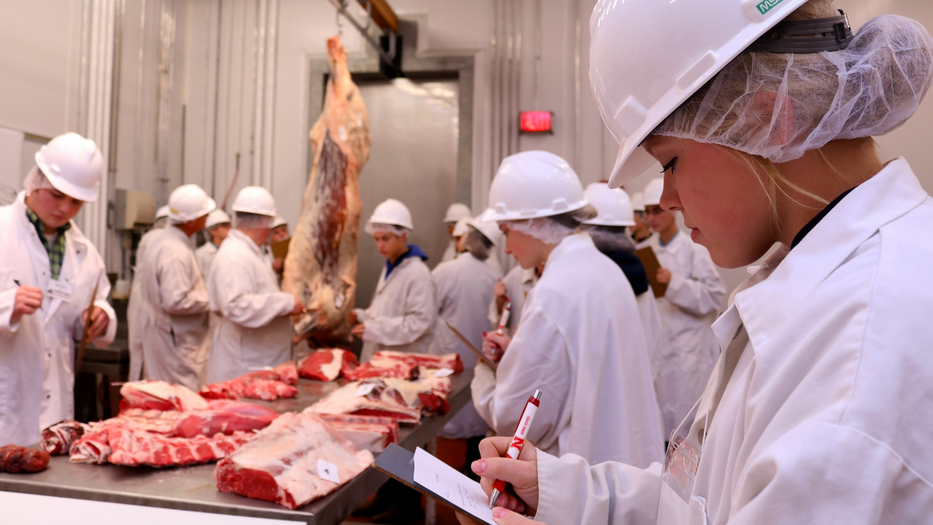 Some students evaluating meat that is hanging.