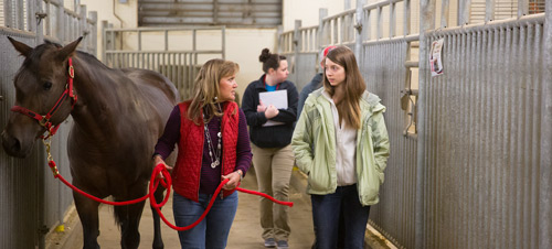 Equine Science Option