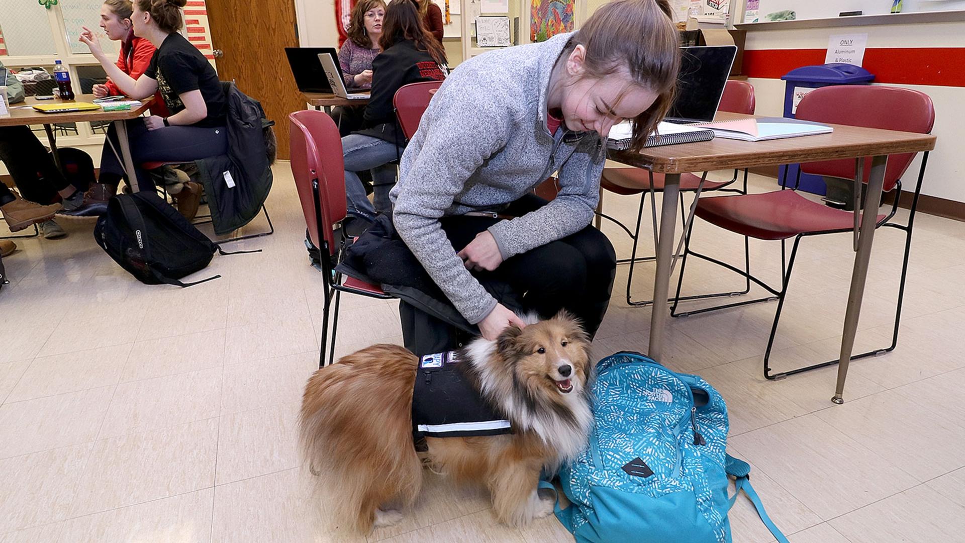 girl pets dog