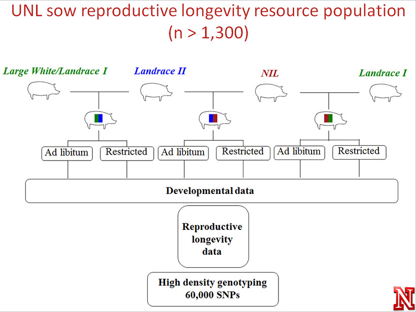 Resource Population