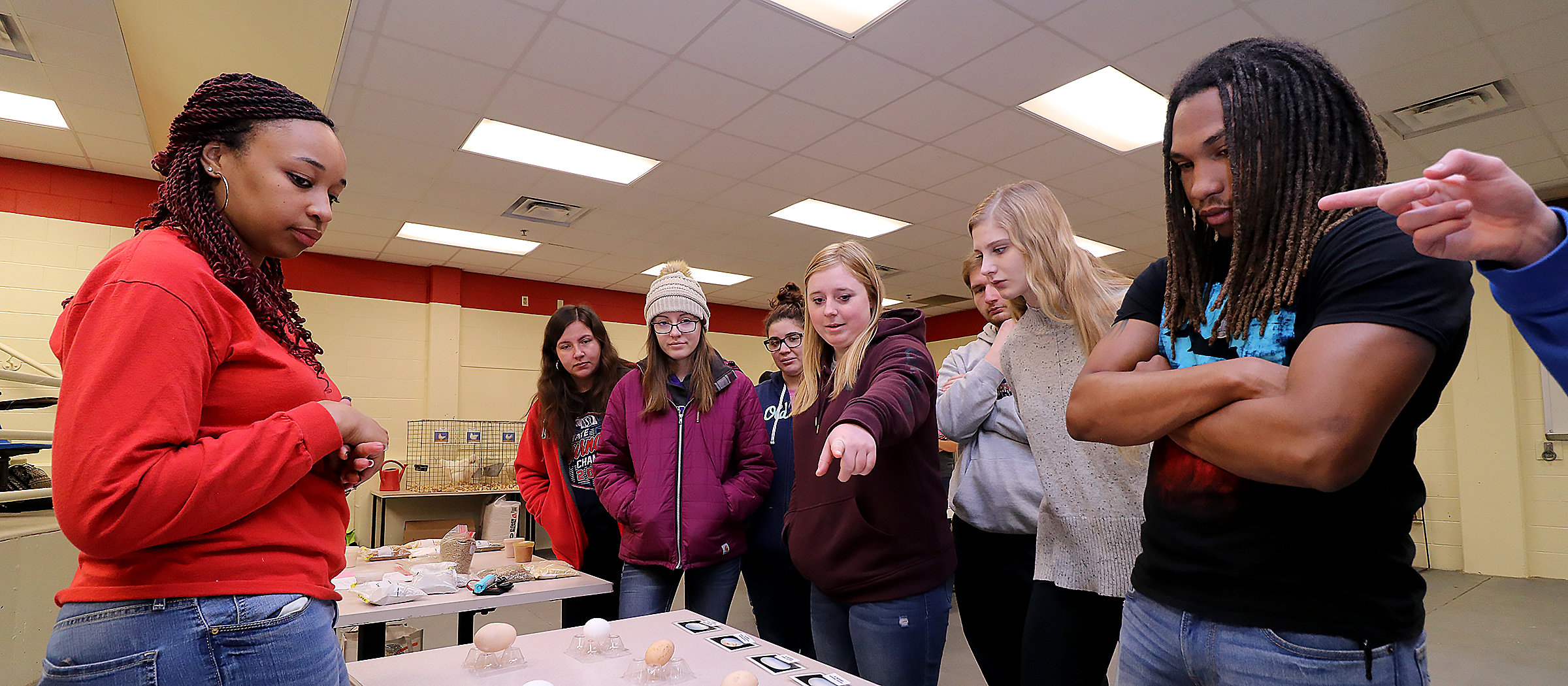 group of student looking at eggs