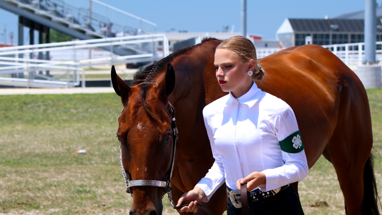 4-H girl walking with a brown horse
