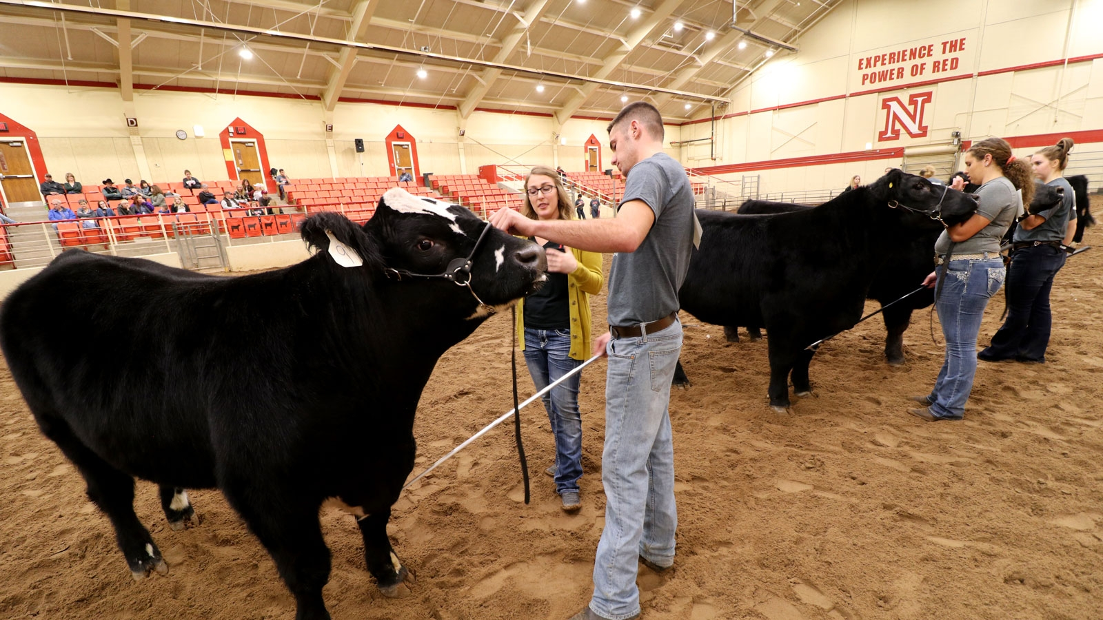a group of students standing next to cattle in an arena