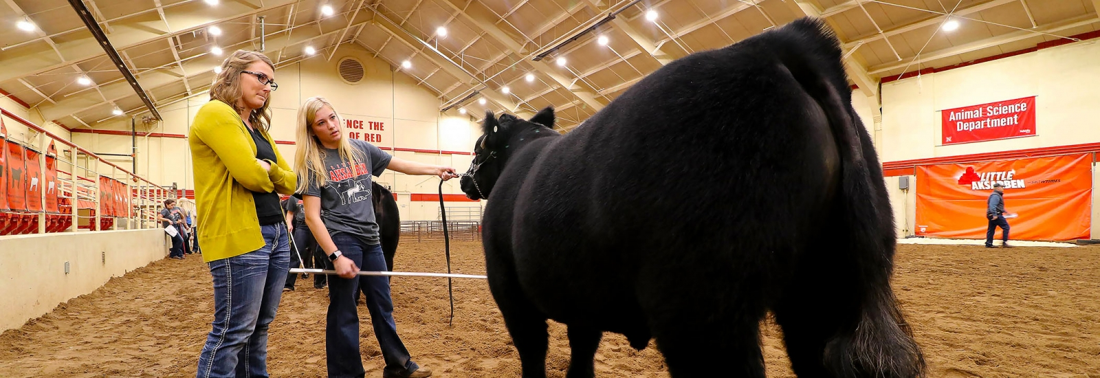 Girl showing her cattle while female judge listens and looks at the cattle